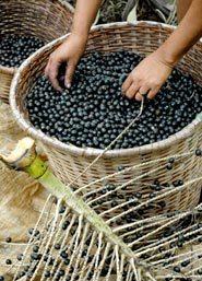 acai_berries