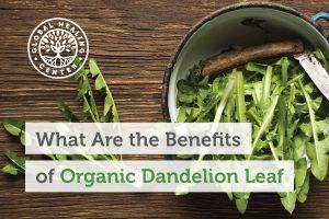 dandelion-leaf-blog-300x200