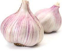 garlic_01