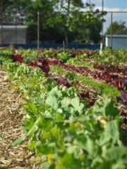 grow_food