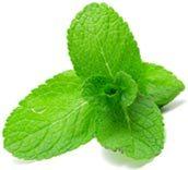 mint_leaf