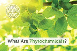 phytochemicals-blog-300x200