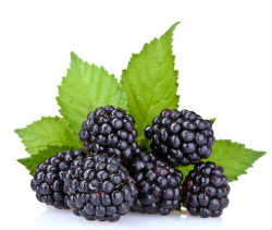 shutterstock_blackberries