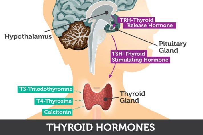 thyroid-hormones