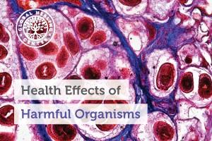 health-effects-of-harmful-organisms-300x200
