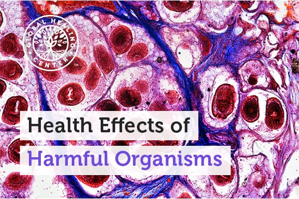 health-effects-of-harmful-organisms