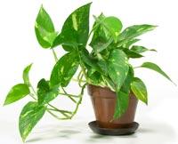 houseplant-011