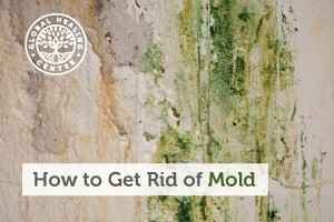 how-to-get-rid-mold-blog-300x200