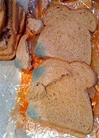 moldy_bread