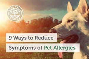 pet-allergies-blog-300x200