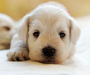 resting-puppy
