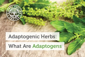 adaptogenic-herbs-what-are-adaptogen-blog-300x200