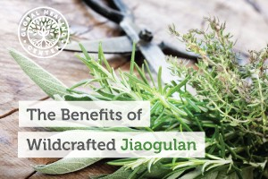 benefits-of-jiaogulan-300x200