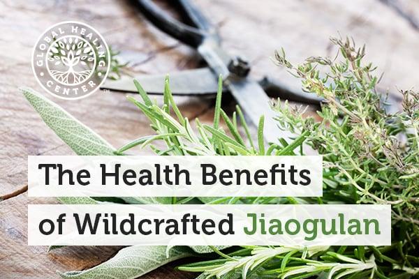 benefits-of-jiaogulan
