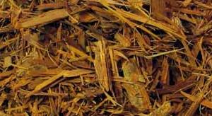 catuaba-bark