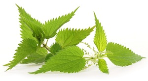 stinging-nettle-small
