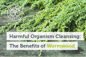 wormwood-blog-300x200