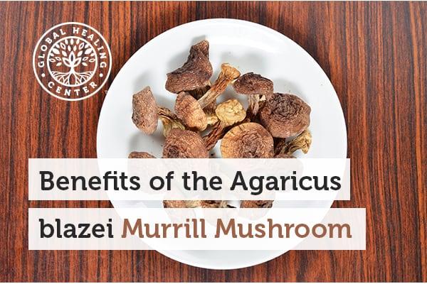 agaricus-blazei-murrill-mushroom