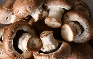 agaricus-blazei-murrill-mushrooms