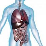 anatomy-digestive-150x150