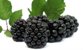 black-rasberries