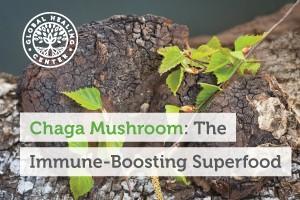 chaga-mushroom-the-immune-boosting-superfood-300x200