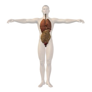 human-body-with-healthy-colon