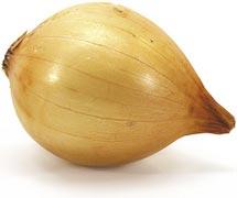 onion_01