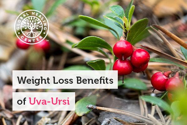 benefits-uva-ursi