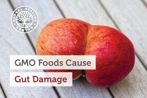 gmo-foods-blog-300x200