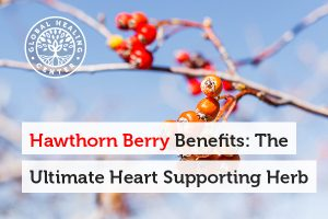 hawthorn-berry-benefits-blog-300x200