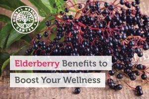 elderberry-benefits-to-boost-your-wellness-BLOG-300x200