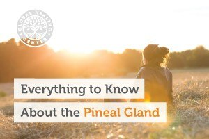 everything-to-know-about-the-pineal-gland-blog-300x200