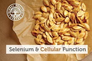is-selenium-an-antioxidant-blog-300x200