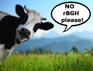 rBGH-cow