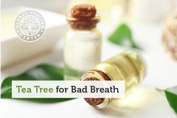 tea-tree-bad-breath