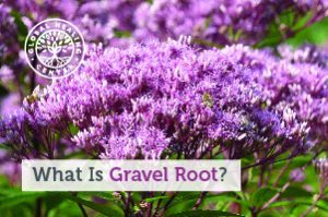 gravel-root-blog-300x199