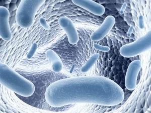 harmful-organisms