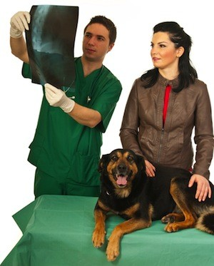 animal-chiropractic