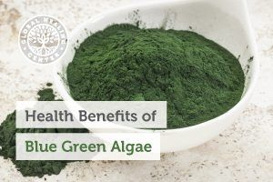 blue-green-algae-blog-300x200