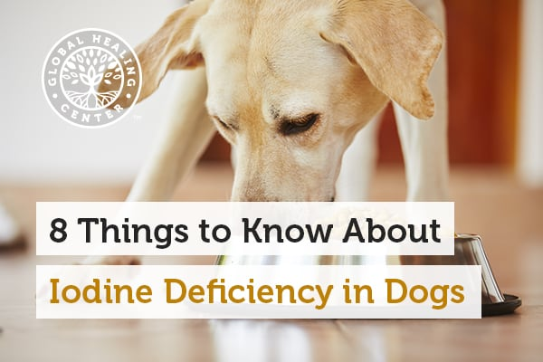 iodine-deficiency-in-dogs