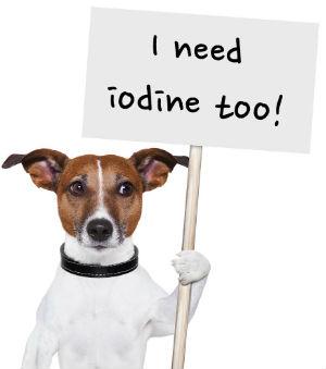 iodine-dog