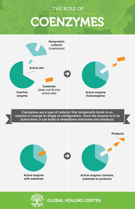 coenzyme-infograph-desktop