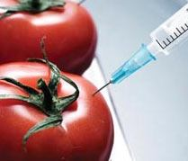 genetically_modified_foods