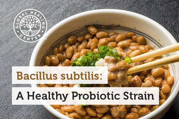 bacillus-subtilis