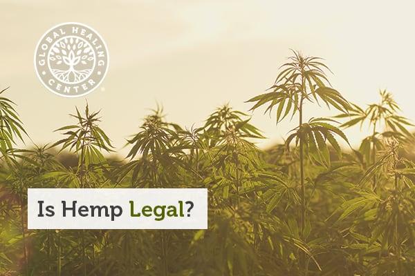 is-hemp-legal