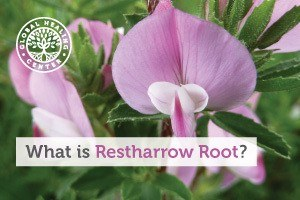 restharrow-root-blog-300x200