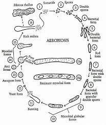 pleomorphism1