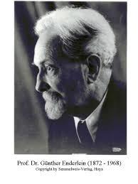 professor-enderlein