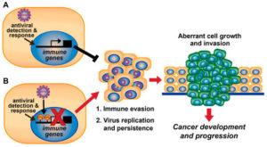 viral-immune-evasion-300x165
